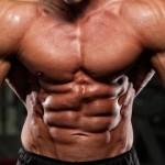 I muscoli e il grasso